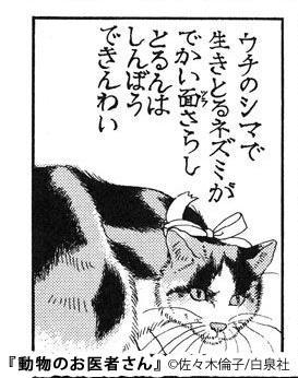 動物 の お 医者 さん ドラマ